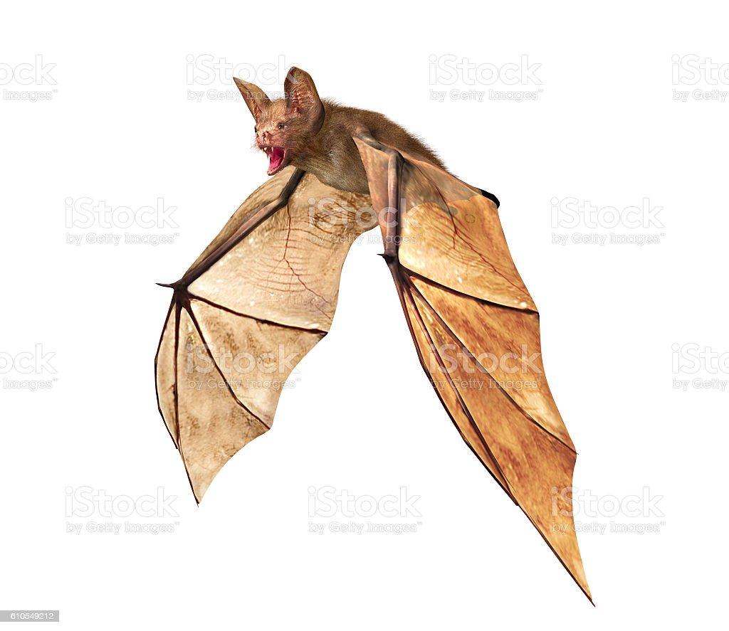 Flying Vampire bat isolated on white background stock photo