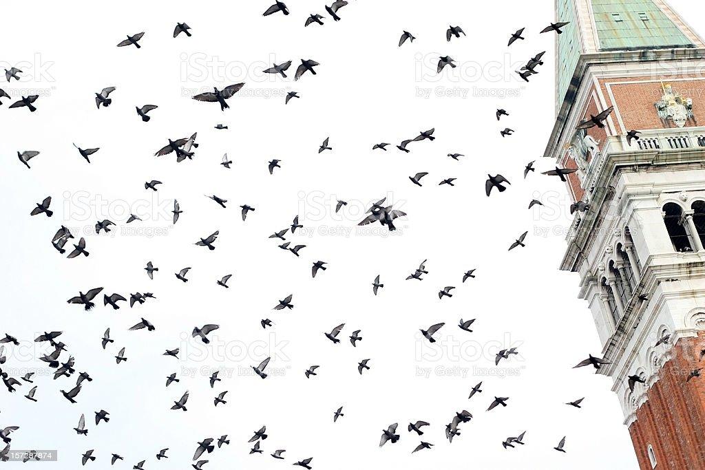 flying venetians stock photo