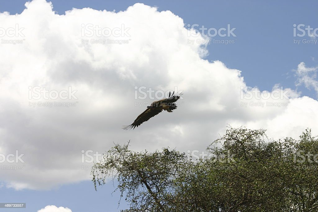 The Serengeti with its 30.000 km2 is located in north Tanzania and...