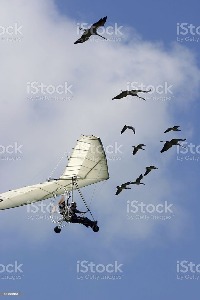 Flying with goose stock photo