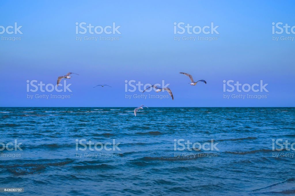 Flyings seagulls over the calm sea. Melancholic background stock photo