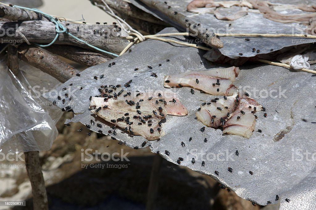 flys on a fish royalty-free stock photo