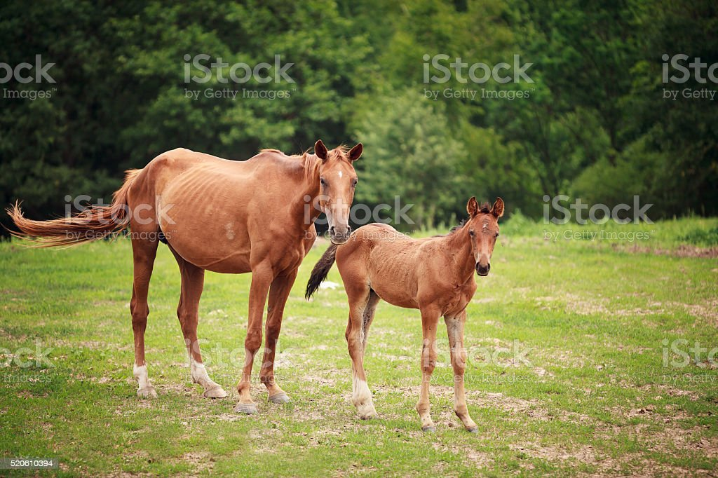 Foal near its mother stock photo