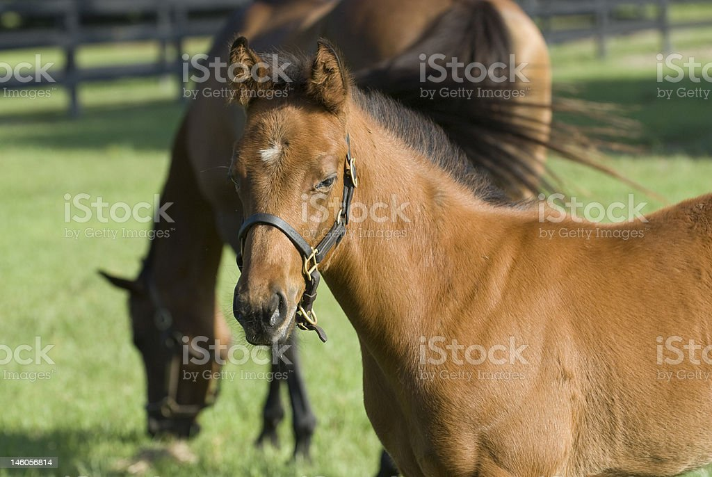 Foal with mother in background stock photo
