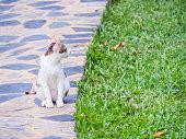 Focus at cat sits on concrete floor