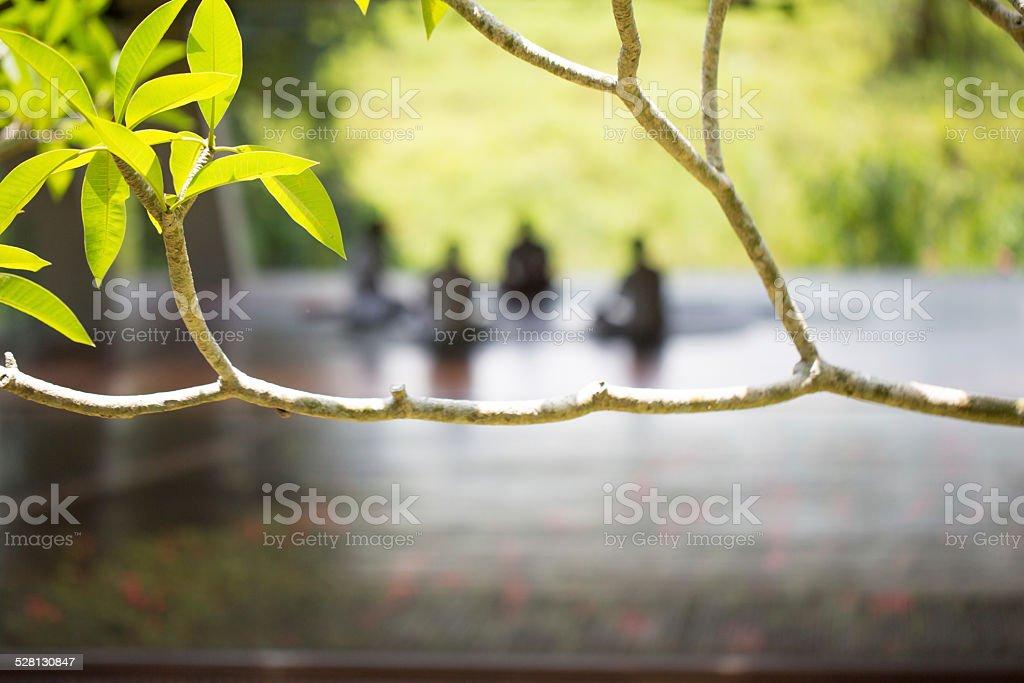 Focus on tree branch stock photo