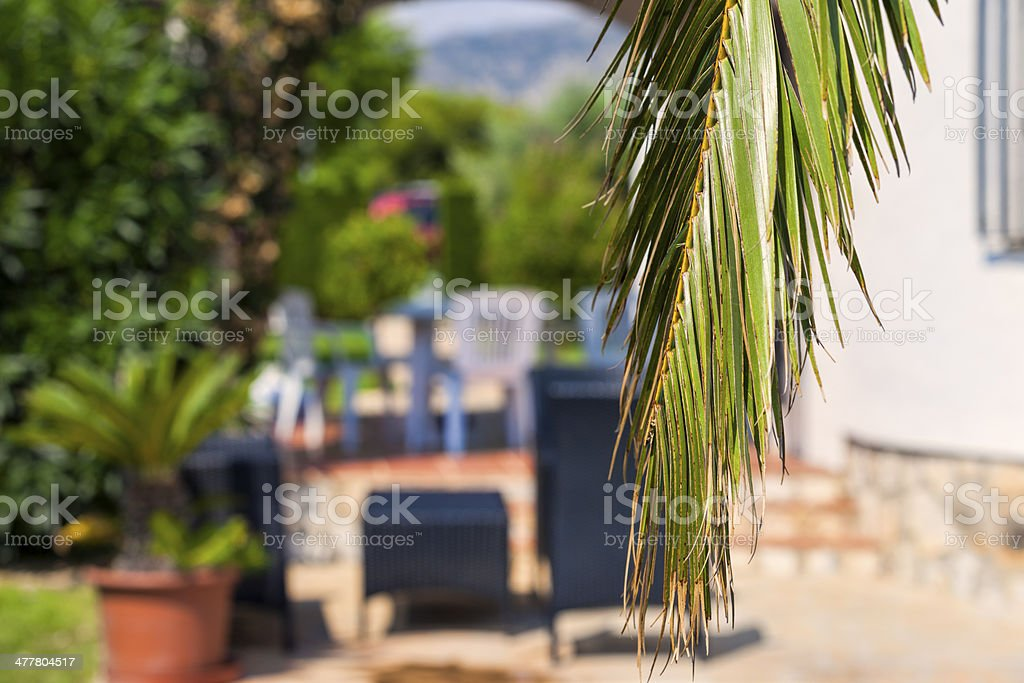 Focus or not focus. royalty-free stock photo