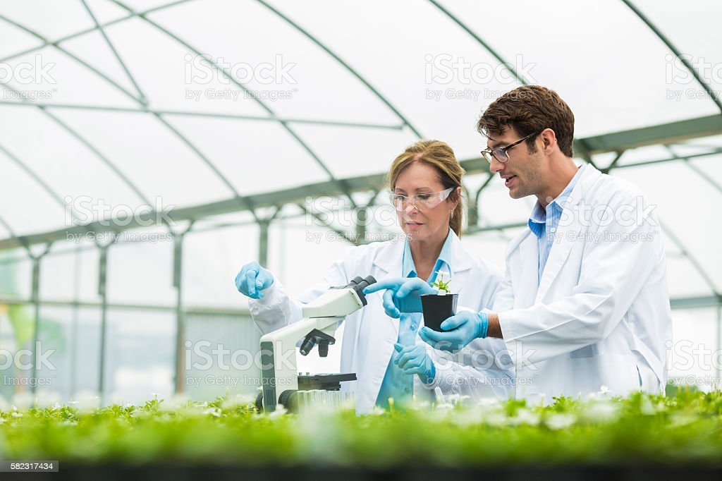 Focused biologists studying plants stock photo