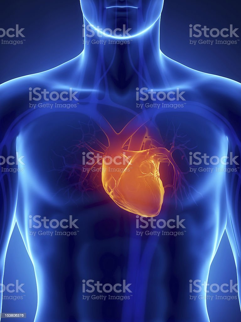 Focused on human heart in chest x-ray royalty-free stock photo