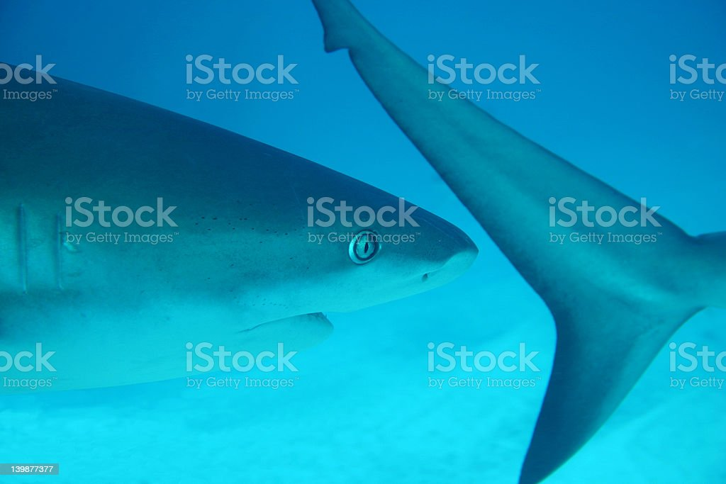 Focusing on a tail royalty-free stock photo