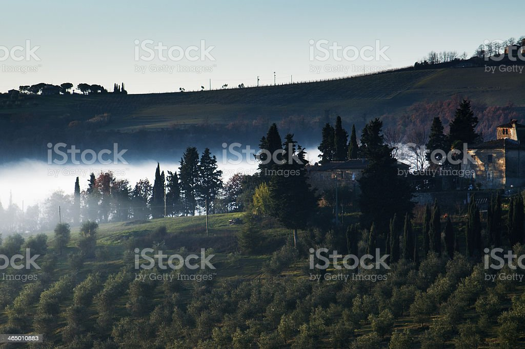 Fog among the cypress trees royalty-free stock photo