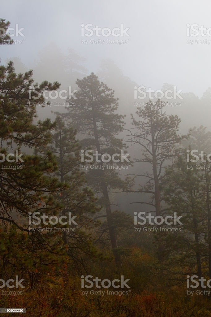 Fog and Autumn in the Pike National Forest stock photo