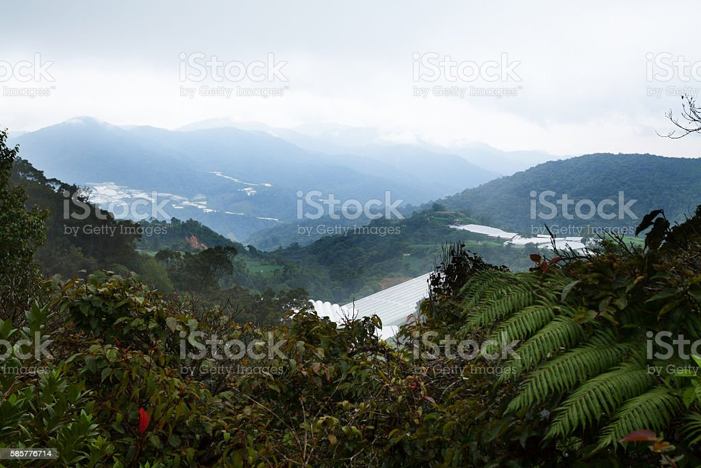 Fog and clouds in Cameron Highlands and valley stock photo