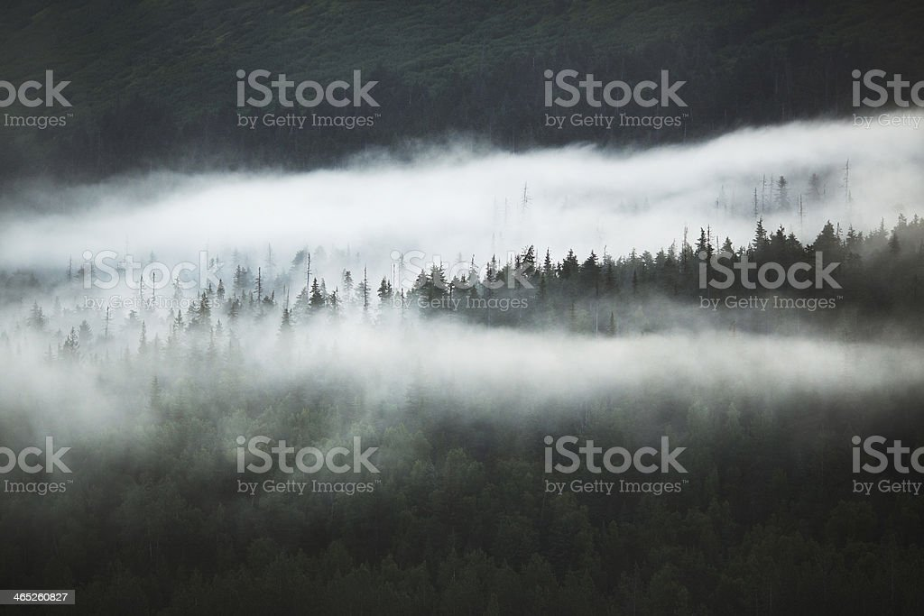 Fog and Clouds on Treetops in Chugach National Forest, Alaska stock photo