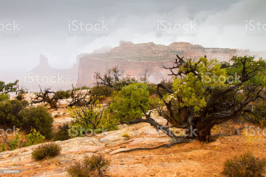 Fog and Mist at Canyonlands stock photo