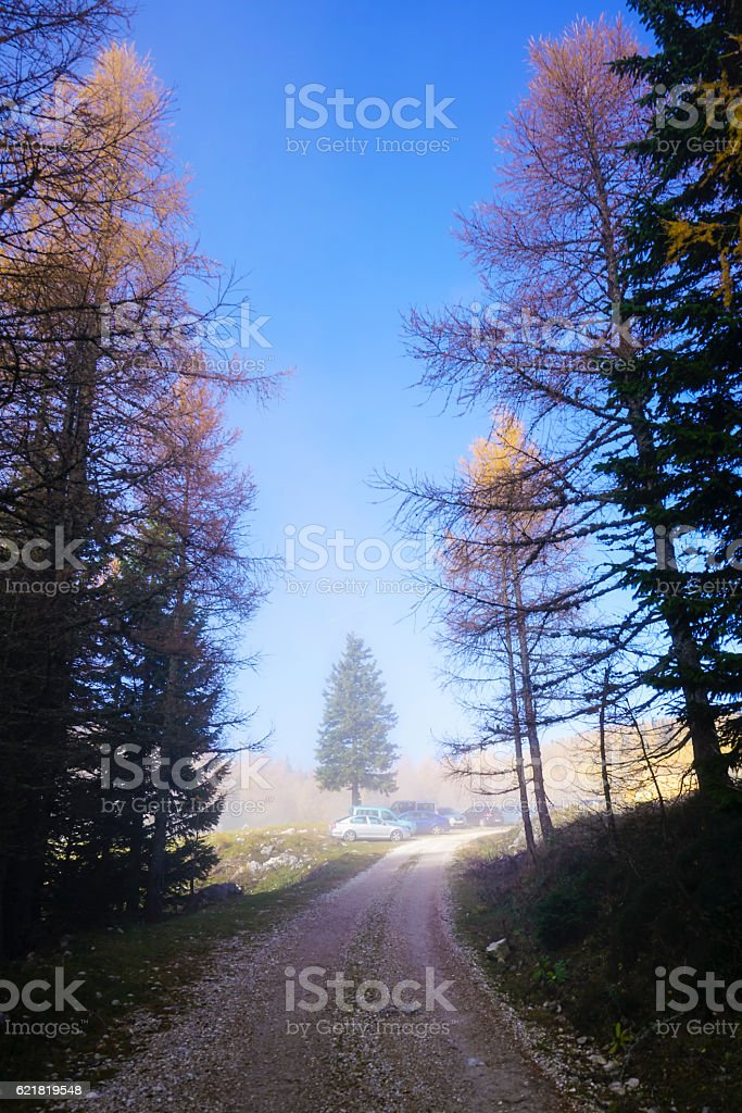 Fog and Sun on Larch Trees in Mountains, Slovenia stock photo