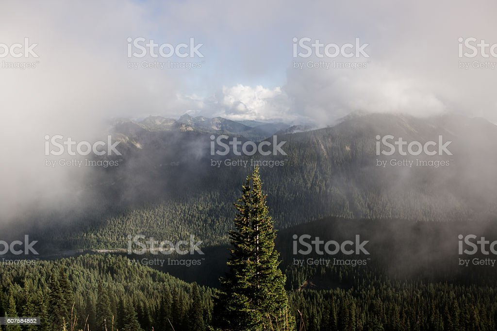Fog and Trees at Mount Rainier National Park stock photo