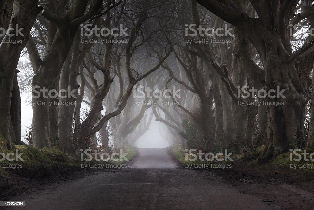 Fog at the Dark Hedges stock photo