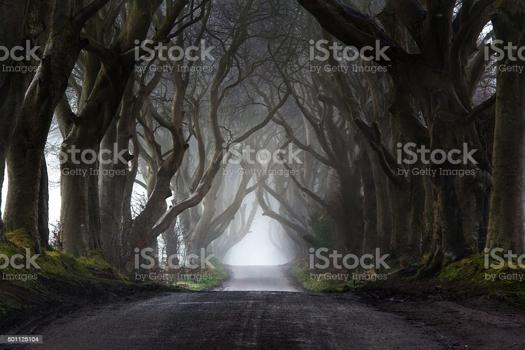 Fog at the Dark Hedges stock photo