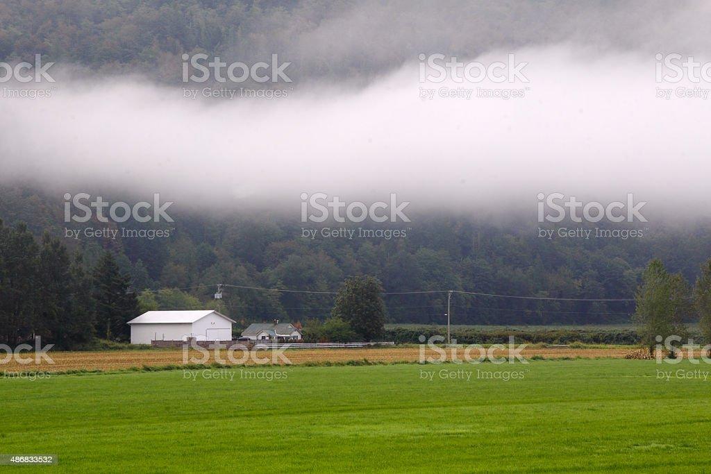 Fog Bank stock photo