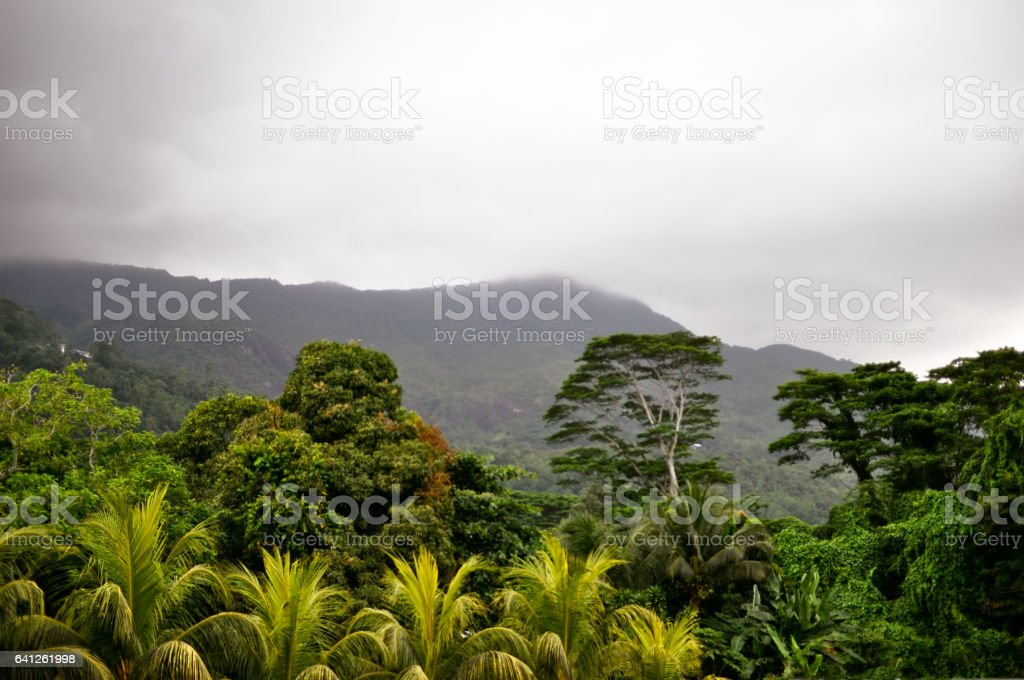 Fog before tropical downpour stock photo
