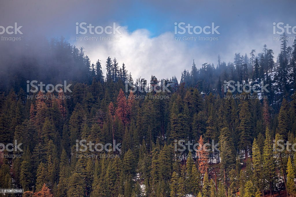 Fog, Cloud and green tree in Yosemite,  California stock photo