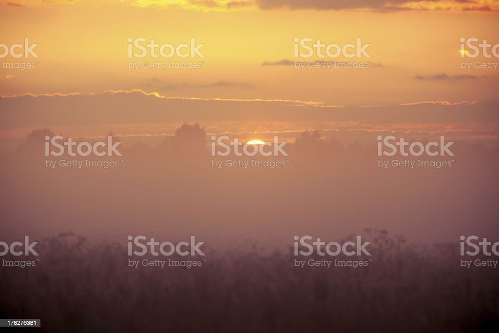 Fog field of grass during sunset royalty-free stock photo