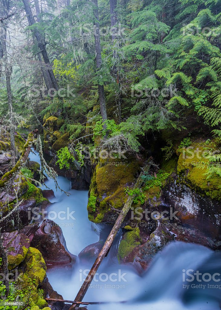 Fog Hangs in the Trees above Moss Covered Avalanche Creek stock photo