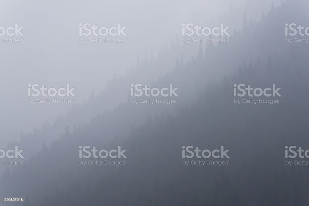 Fog hid mountain forest. Abstract nature background stock photo