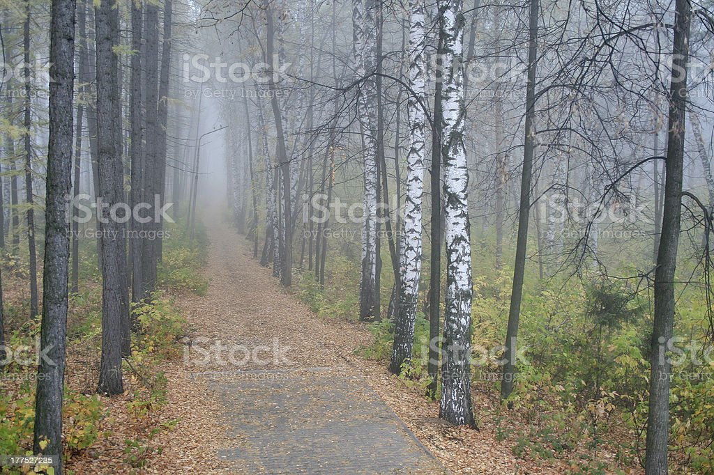 Fog in a wood royalty-free stock photo
