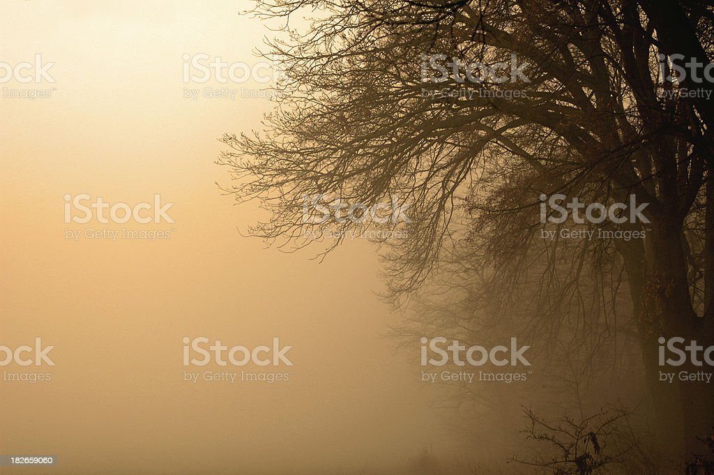 fog in forest royalty-free stock photo