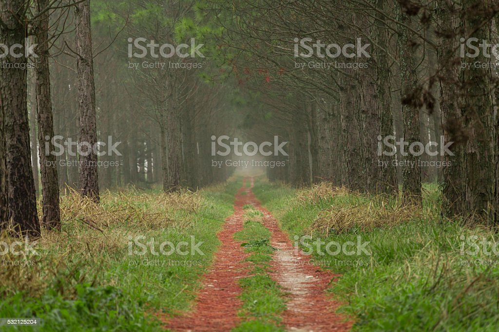 niebla en el bosque stock photo