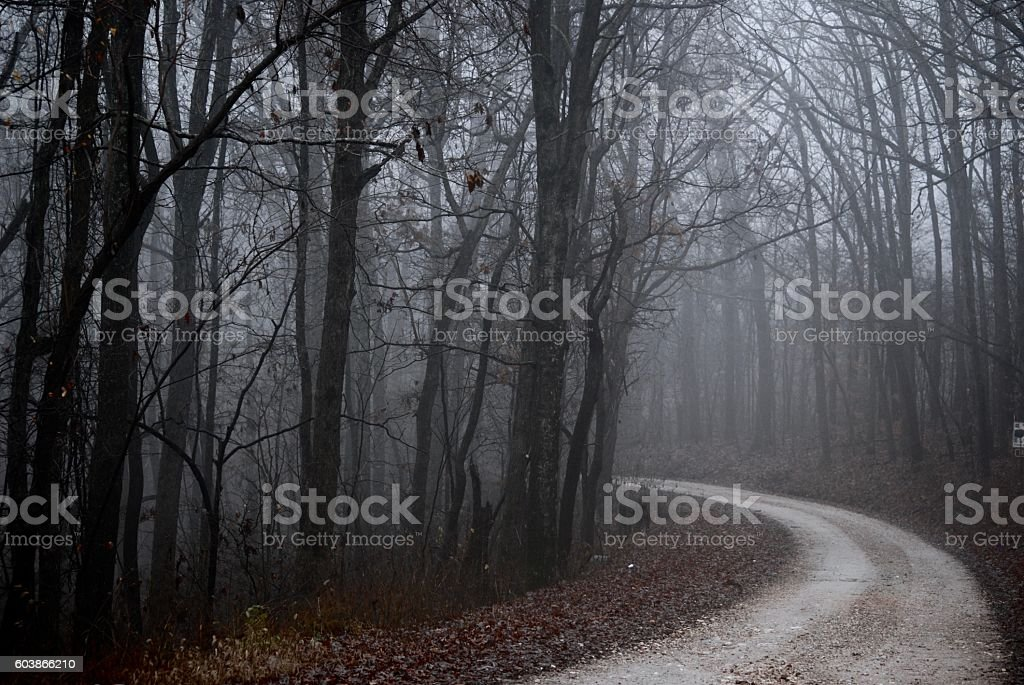 Fog in the Middle of the Day stock photo