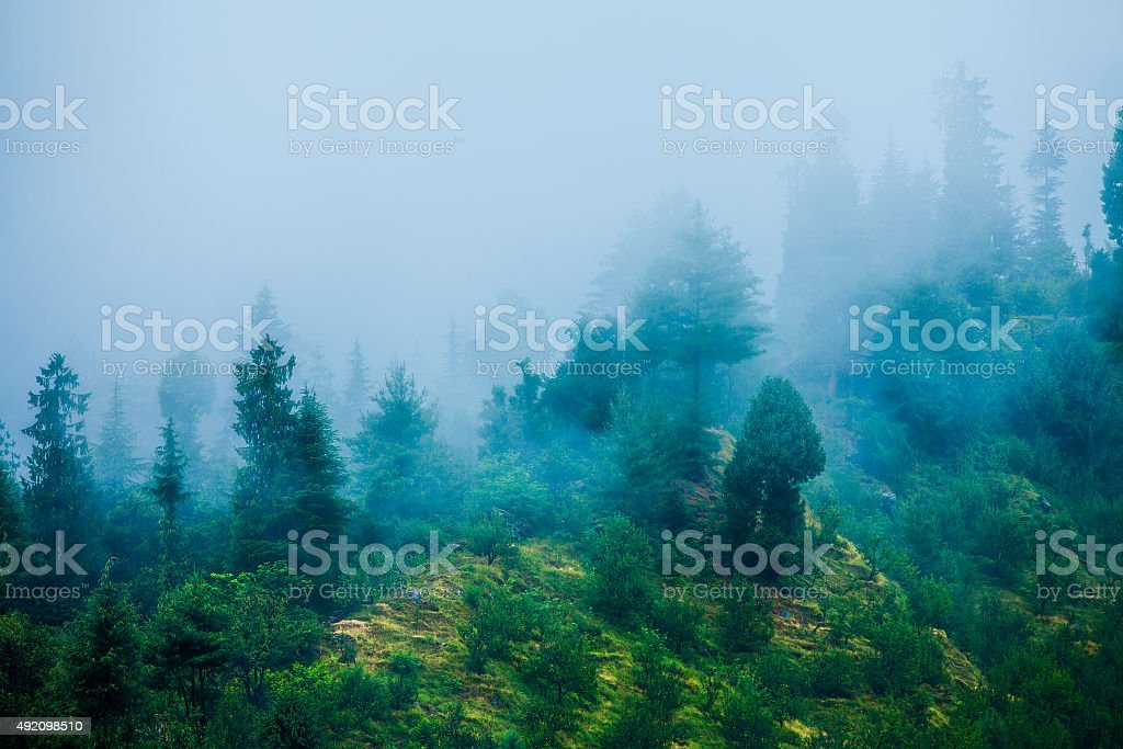 Fog in the morning forest stock photo