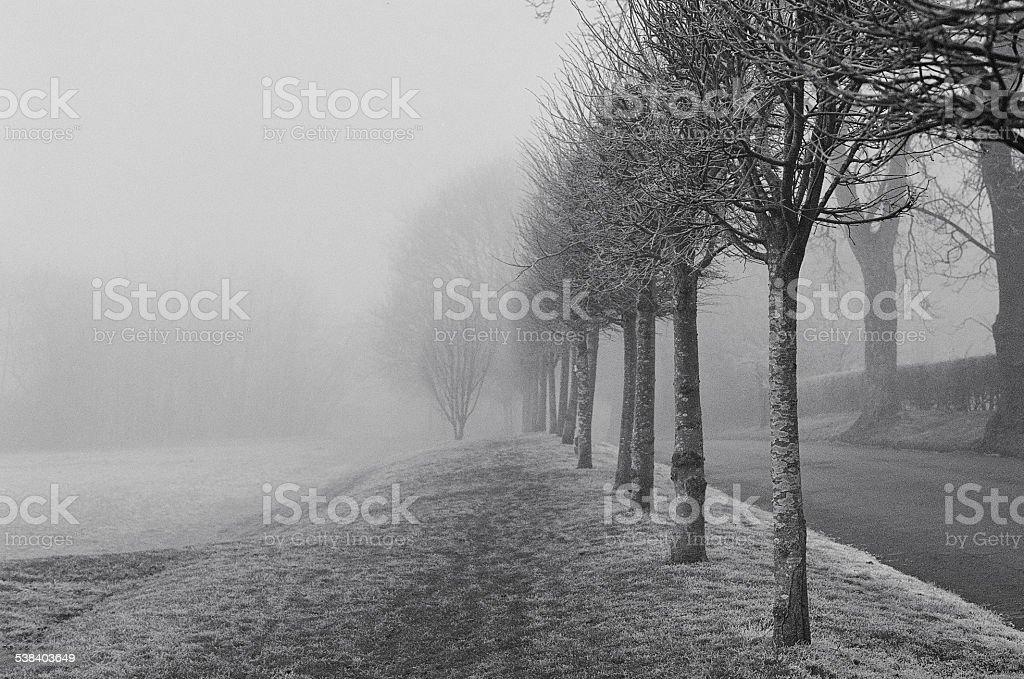 Fog in the park stock photo