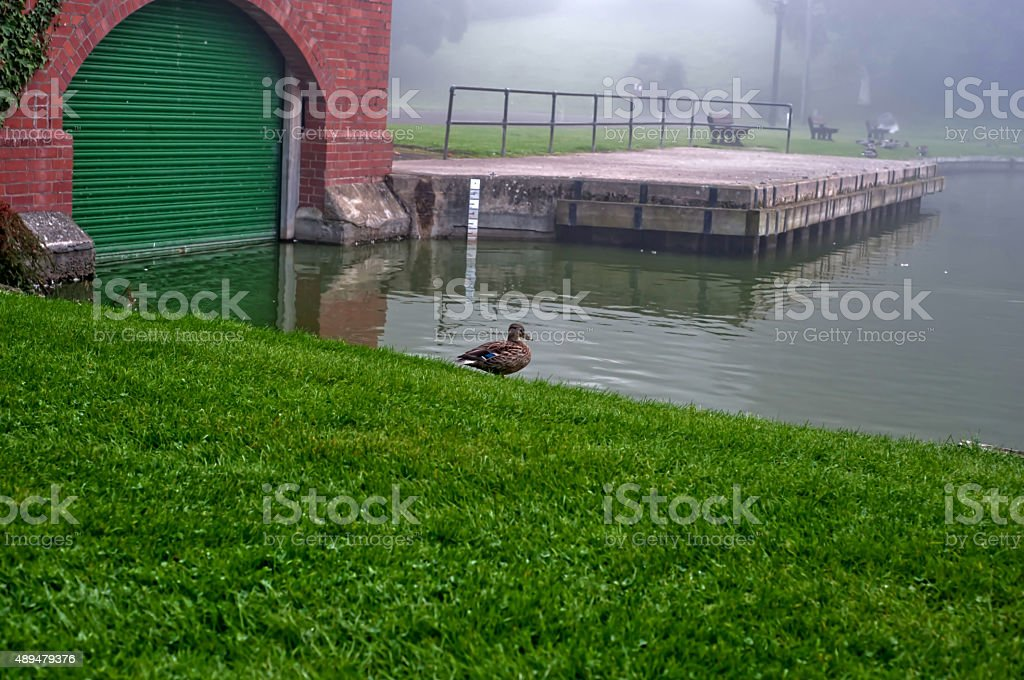 Fog in the park- Warminster stock photo