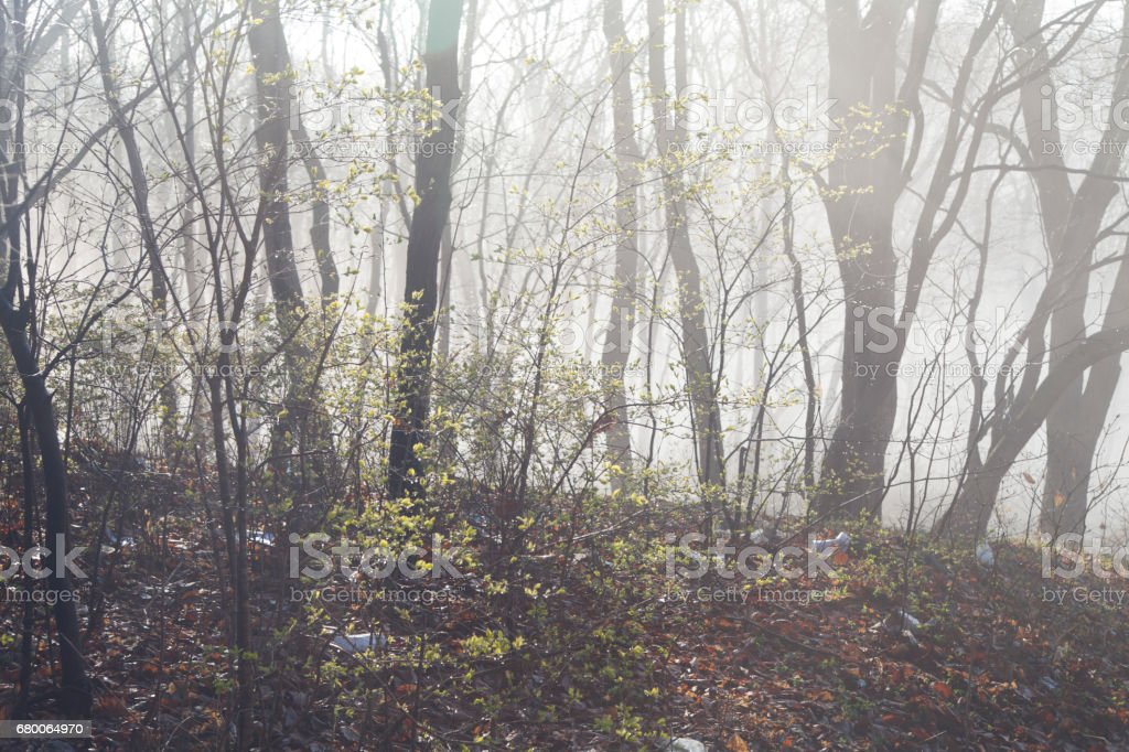 Fog in the wood stock photo