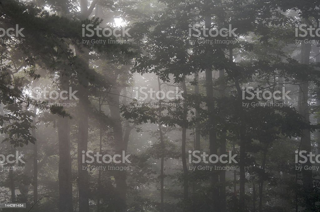 fog in the woods stock photo