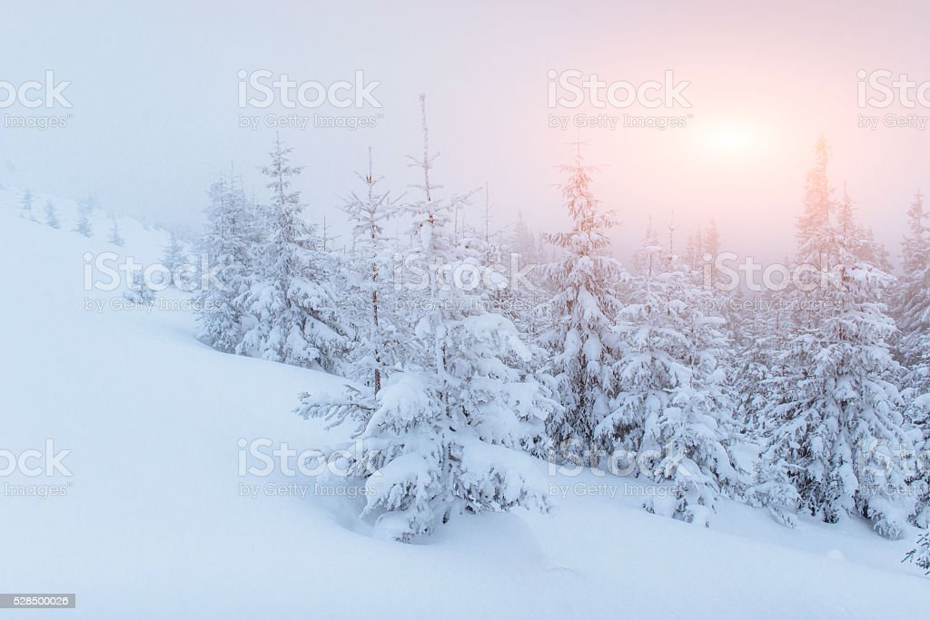 fog in winter mountains. Fantastic sunset stock photo