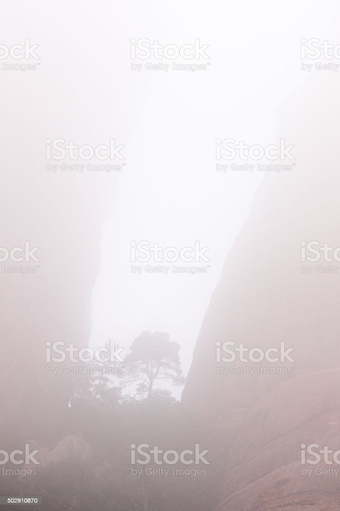 Fog Mist Red Rock Canyon Tree stock photo
