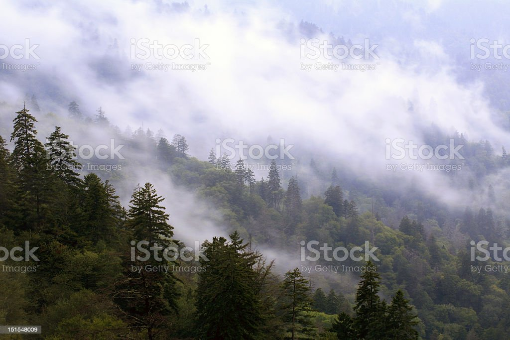 fog on mountain royalty-free stock photo