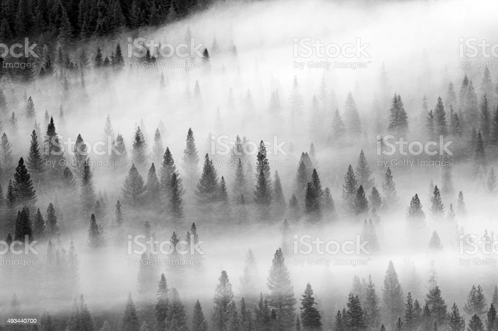 Fog on the Mountain Forest stock photo