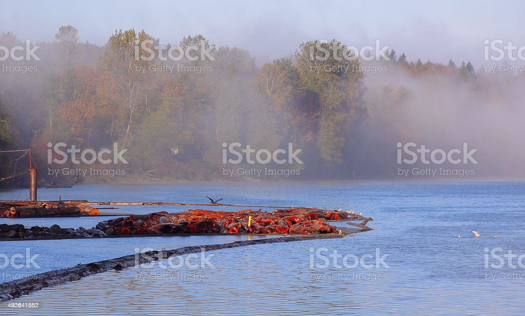 Fog on the River stock photo