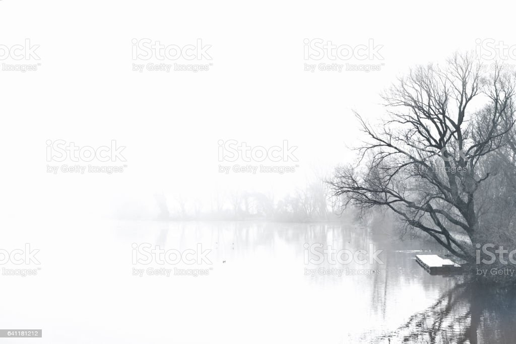 Fog over a lake with bare tree stock photo