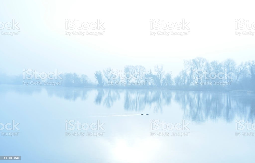 Fog over a lake with swimming ducks and water reflection stock photo