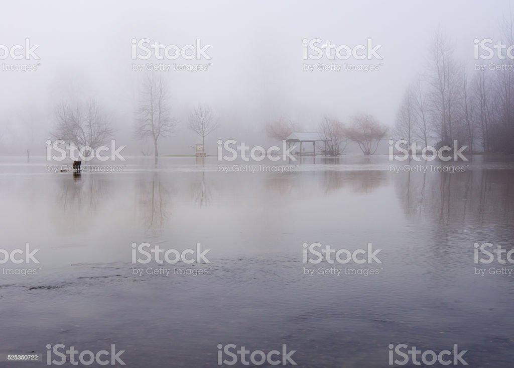 Fog over flooded park stock photo