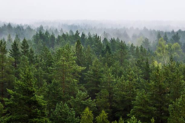 nice view evergreen trees - photo #10