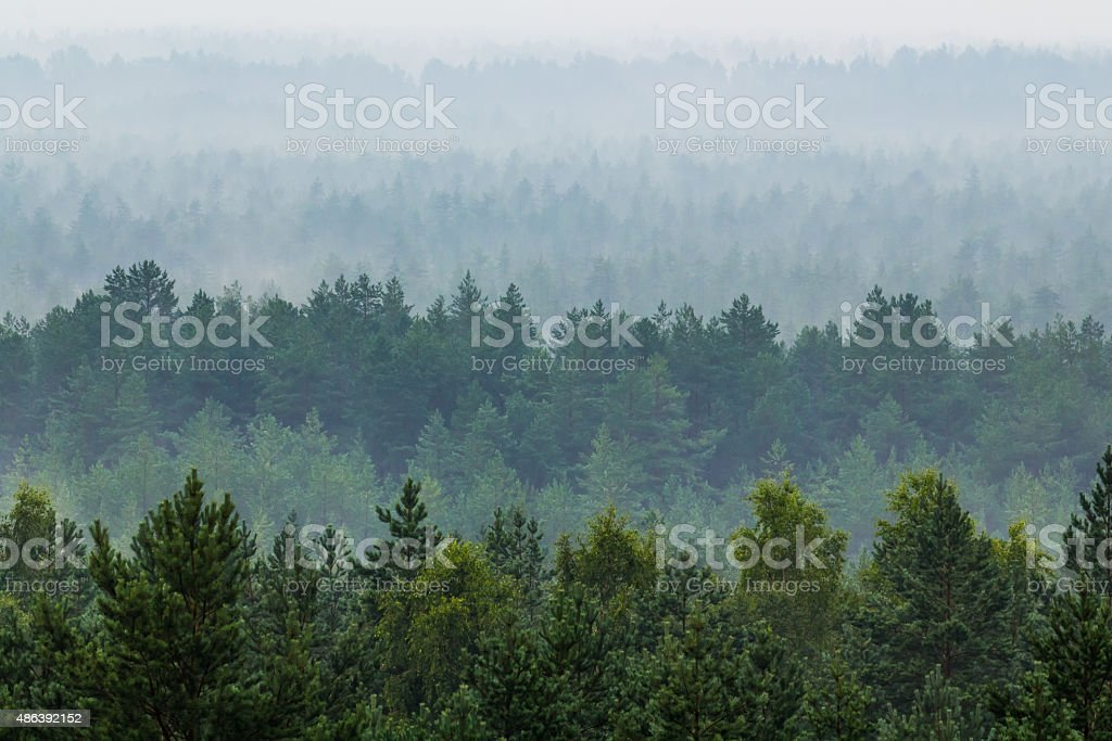 Fog over the forest stock photo