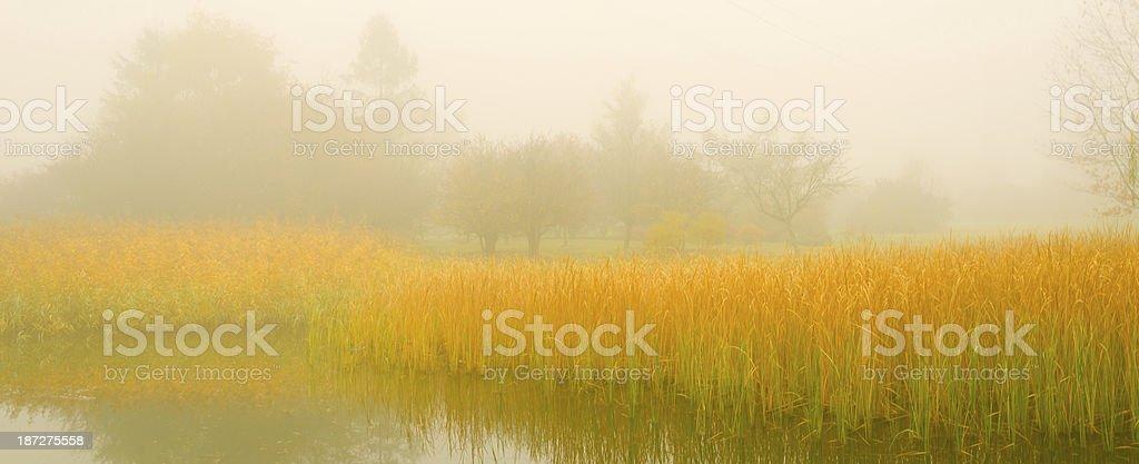 Fog Over the Pond - XXXL royalty-free stock photo