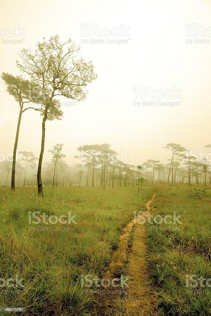Mgła zbiór zdjęć royalty-free